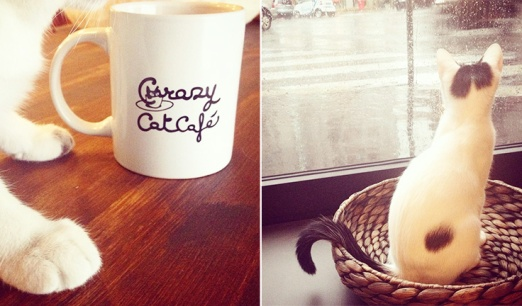 cat-cafes-in-italy-including-milan-turin-and-rome-Crazy-Cat-Cafe-Milano