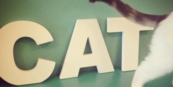 crazy_cat_milano_cafe_cover