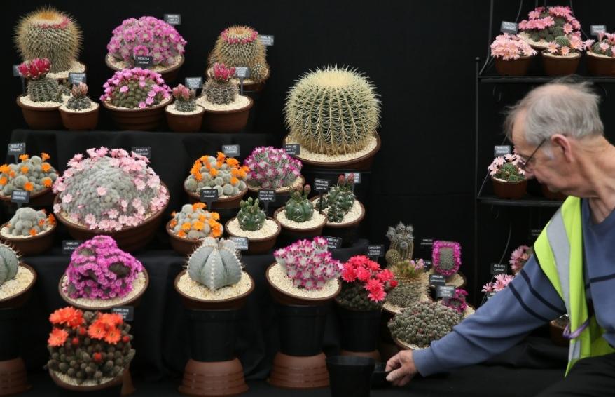 chelsea-flower-show-cactus-display-2016