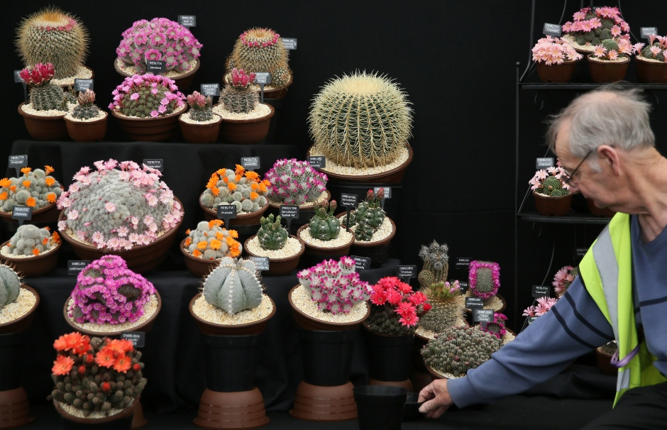 chelsea-flower-show-cactus-display-2016