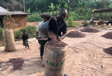 USA is the top country that imports the cocoa seeds- $1.38B