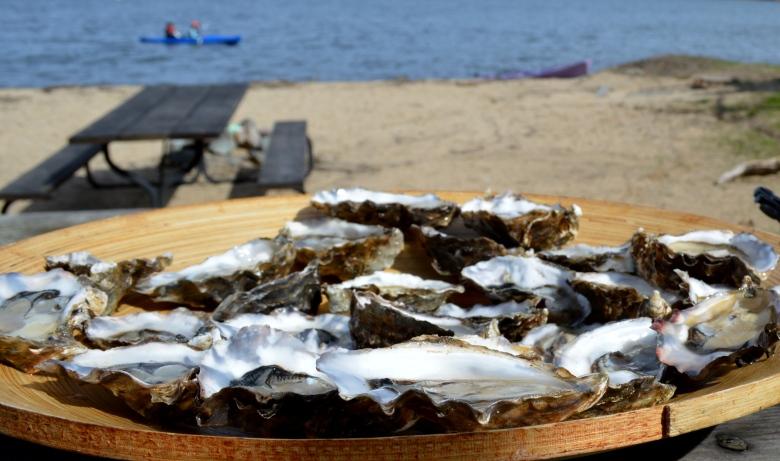 oystersweb