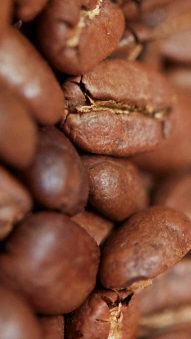 Coffee Beans (photo: courtesy Pitti Taste)