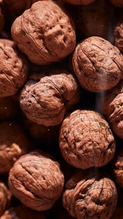 Walnuts in the Shell (photo: courtesy Pitti Taste)