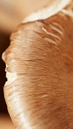 Mushroom Caps (photo: courtesy Pitti Taste)