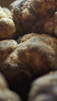 Italian Truffles (photo: courtesy Pitti Taste)