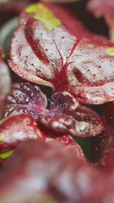 Herb Leaf (photo: courtesy Pitti Taste)